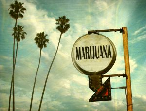 Los Angeles Cannabis Business Licensing