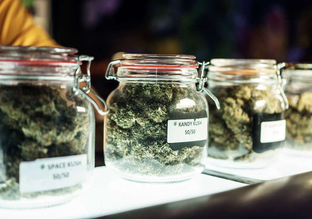 States Prepare for Marijuana Business Application Processes
